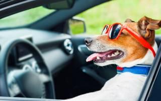 Правила перевозки животных в автомобиле